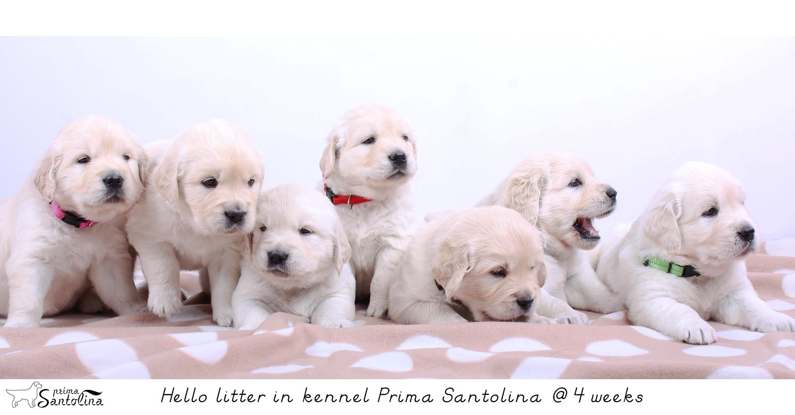 Hello_Prima_Santolina_litter_4weeks_IMG_9264