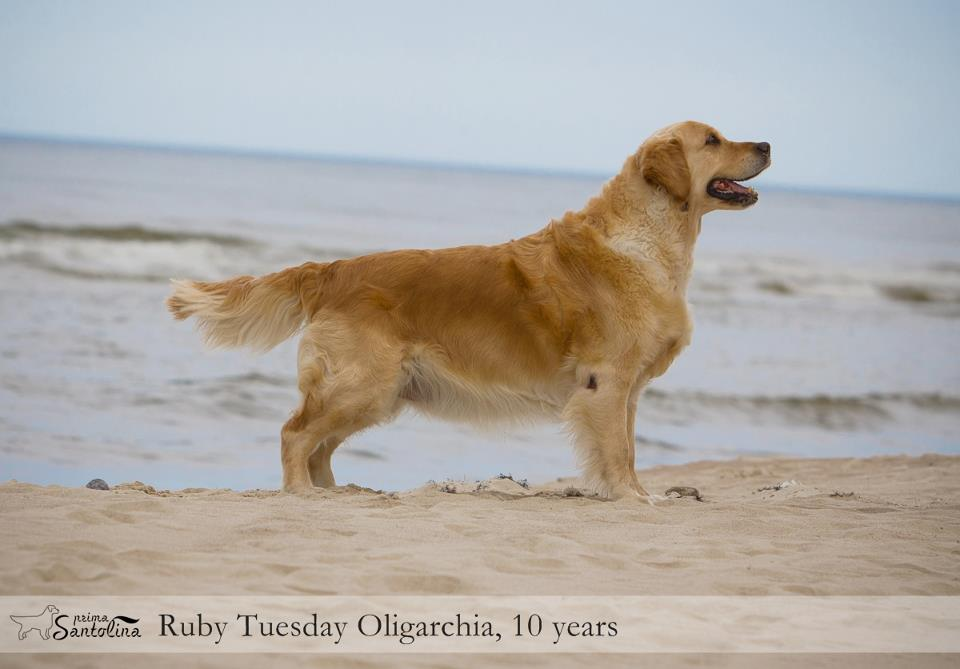 Ruby Tuesday Oligarchia, Top veteran 2011