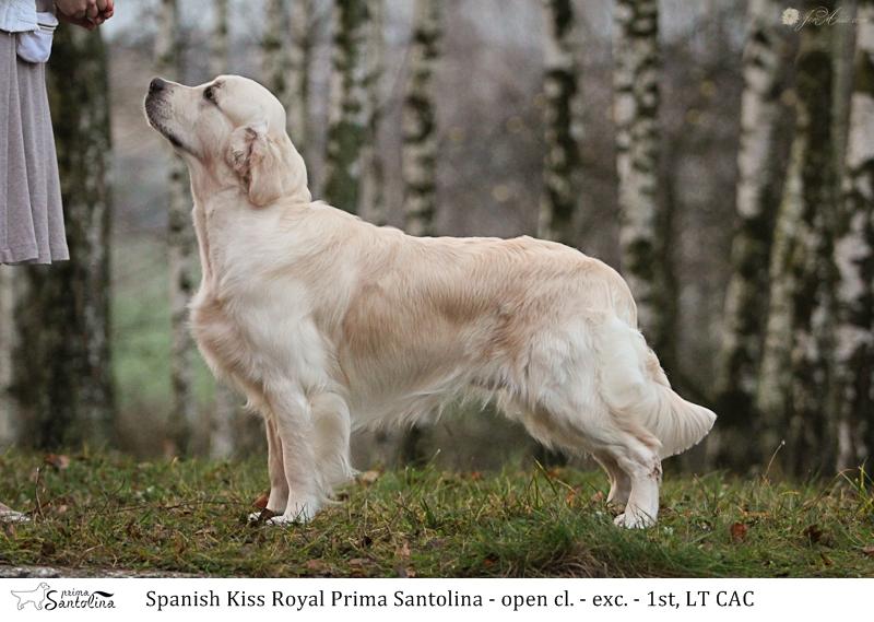 Spanish Kiss Royal Prima Santolina