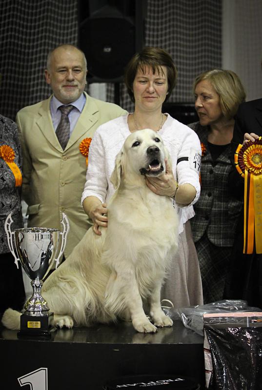 Pirmojoje Kėdainių parodoje gražiausiu parodos šunimi pripažintas Al Capone By Sakura!